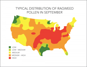 Ragweed Allergy Season In US
