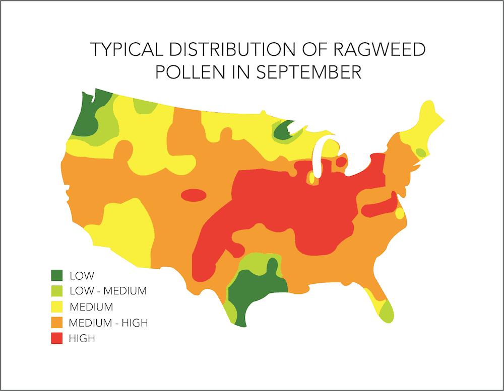 Ragweed Allergy Season In US